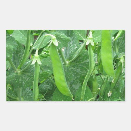 Edible Peas Ready to Eat - photograph Rectangular Sticker