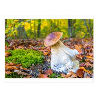 Edible porcini mushroom on forest floor in fall postcard