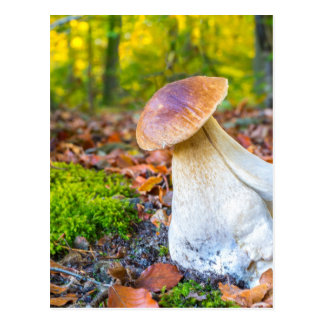 Edible porcini mushroom on forest floor in fall postcard