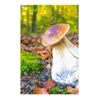 Edible porcini mushroom on forest floor in fall stationery