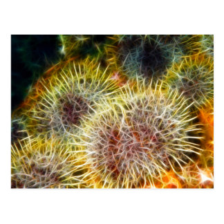 Edible Sea Urchin Postcard