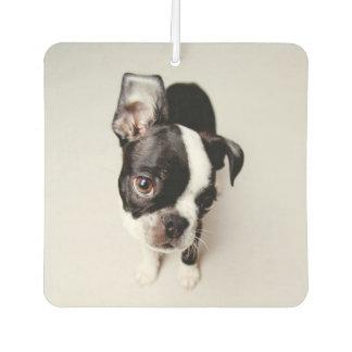Edison Boston Terrier puppy. Air Freshener