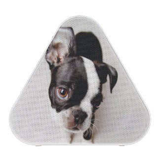 Edison Boston Terrier puppy. Bluetooth Speaker