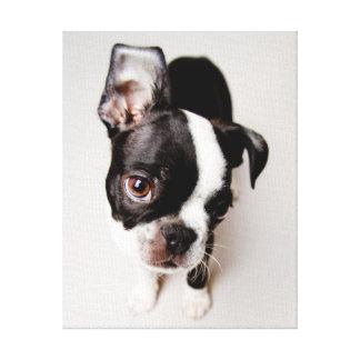 Edison Boston Terrier puppy. Canvas Print