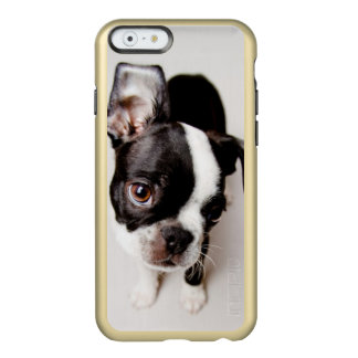 Edison Boston Terrier puppy. Incipio Feather Shine iPhone 6 Case