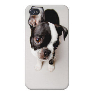 Edison Boston Terrier puppy. iPhone 4/4S Covers