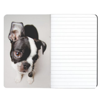 Edison Boston Terrier puppy. Journal