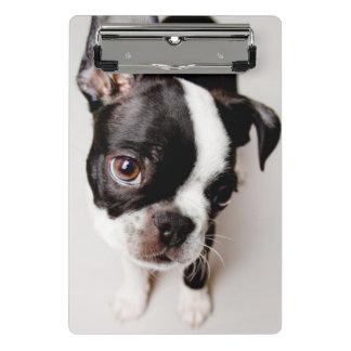 Edison Boston Terrier puppy. Mini Clipboard