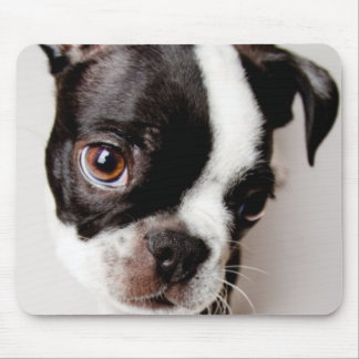 Edison Boston Terrier puppy. Mouse Pad