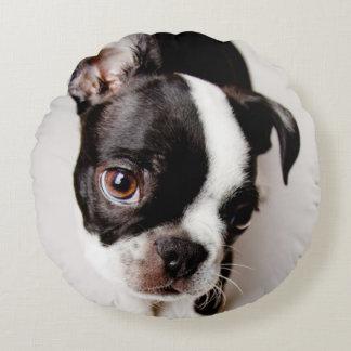 Edison Boston Terrier puppy. Round Pillow