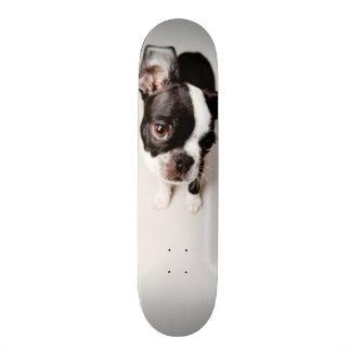 Edison Boston Terrier puppy. Skateboard Deck