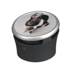 Edison Boston Terrier Puppy. Speaker at Zazzle