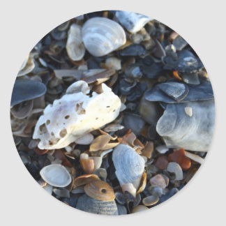 Edisto Beach Shells Classic Round Sticker