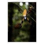 Edisto Golden Silk Spider 3519 Greeting Card