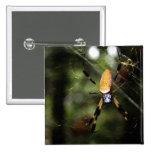 Edisto Golden Silk Spider 3519 Pinback Buttons
