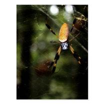 Edisto Golden Silk Spider 3519 Postcard
