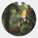 Edisto Golden Silk Spider 3519 Round Stickers