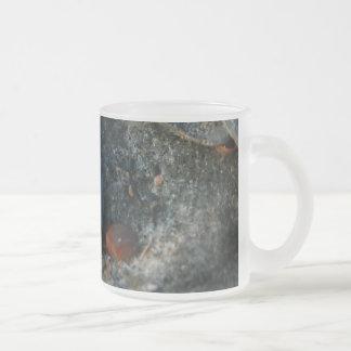 Edisto Island Shell Still Life Mug