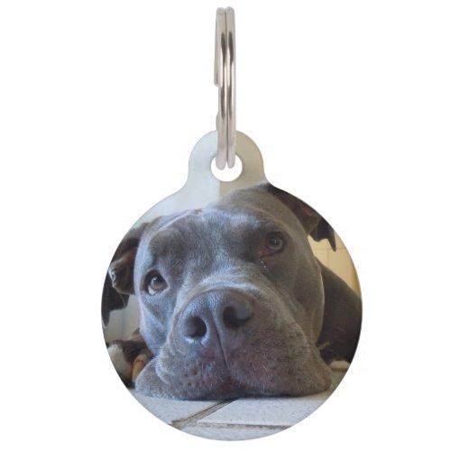 Editable Brown Pitbull Dog Pet ID Tag