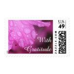 "Editable Text ""With Gratitude"", Pink Azalea Photo Postage"