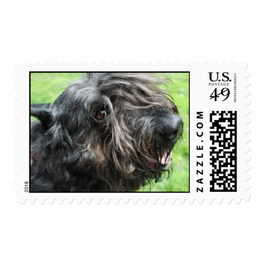 Edith the Bouvier des Flandres Postage