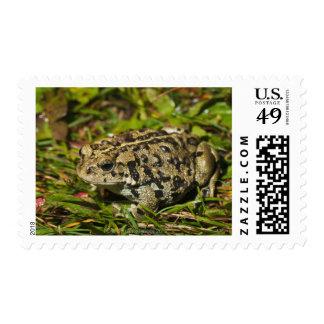edmonton, alberta, canada 2 postage stamp
