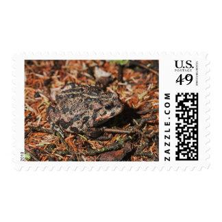 edmonton, alberta, canada 3 stamp