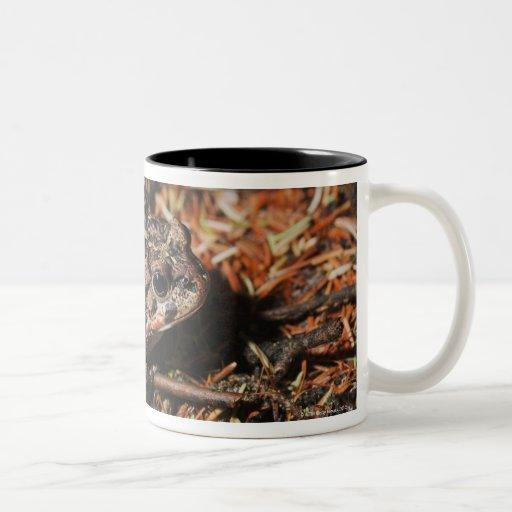 edmonton, alberta, canada 3 Two-Tone coffee mug