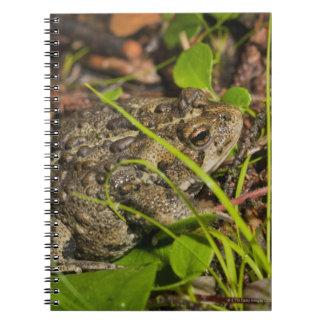 edmonton, alberta, canada notebook