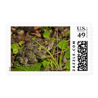 edmonton, alberta, canada stamps