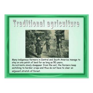 Educación, historia, agricultura maya postales