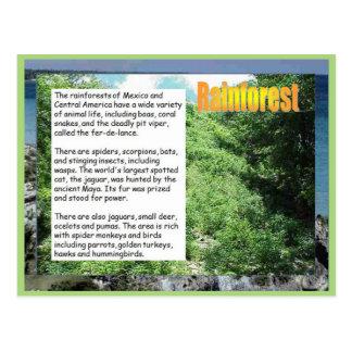 Educación, historia, selvas tropicales en America Tarjetas Postales