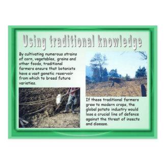 Educación, historia, usando conocimiento maya tarjeta postal