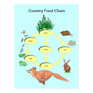 Education, Science, Countryside food chain Postcard