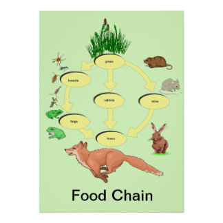 Education, Science, Countryside Food Chain Poster