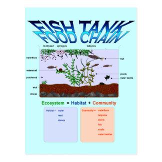 Education, Science, Fish tank food chain Postcard