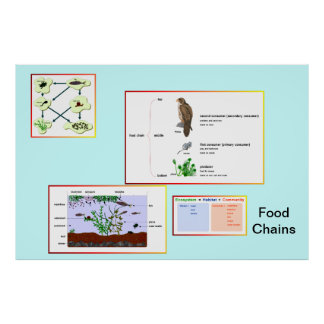 Education, Science,   Food Chains 2 Posters