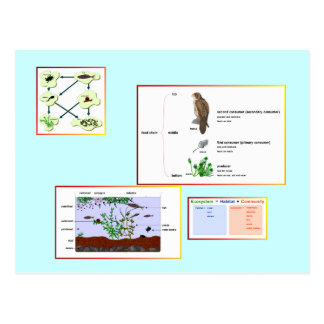 Education, Science,  Food Chains Postcard