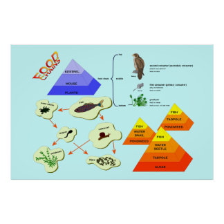 Education, Science,   Food Chains Poster