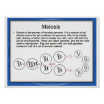 Education, Science, Meiosis Posters