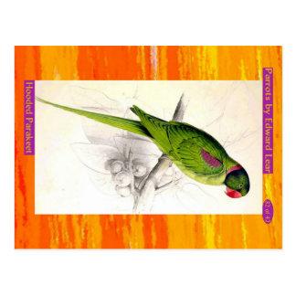 Edward Lear. Hooded Parakeet. Postcard
