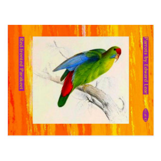Edward Lear. Red-fronted Parakeet. Postcard