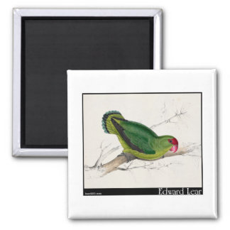 Edward Lear's Abyssinian Parakeet Fridge Magnet