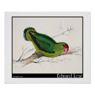 Edward Lear's Abyssinian Parakeet Posters