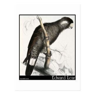 Edward Lear's Baudin's Cockatoo Postcard