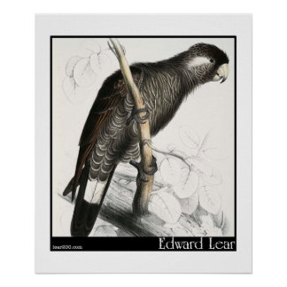 Edward Lear's Baudin's Cockatoo Poster
