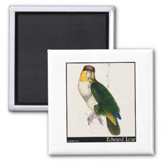 Edward Lear's Bay-Headed Parrot Fridge Magnet