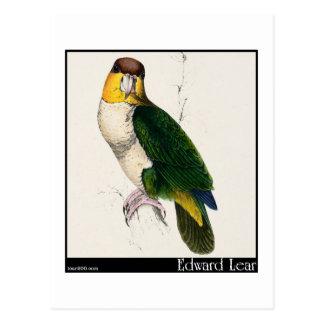 Edward Lear's Bay-Headed Parrot Postcard