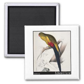 Edward Lear's Black-Tailed Parakeet Fridge Magnet