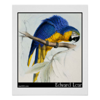 Edward Lear's Blue and Yellow Macaw Poster